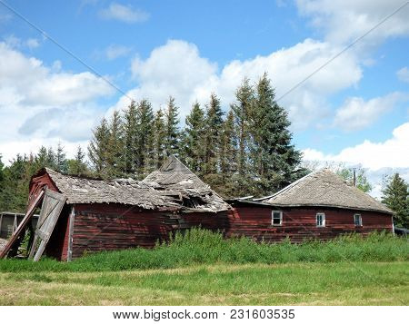 A Crumbling Barn On A Abandoned Farmstead In Front Of Some  Pine Trees.