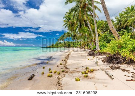 Wild natural beach with palm trees and coconuts on south side of Upolu, Samoa Islands