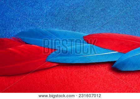 Blue and red  feathers. Carnival. Colored  feathers