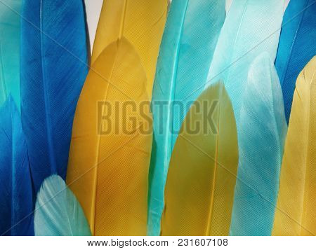 Blue and yellow feathers. Carnival. Colored feather