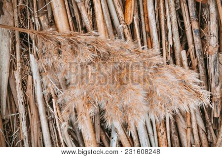 Dry Reeds Background, Texture For Easter Design