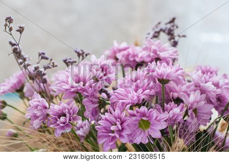 Pink Chrysanthemums With Dry Yellow Ears Of Wheat