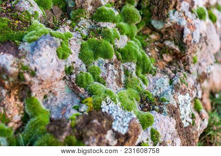 Green Moss And Lichen On Granite Stones