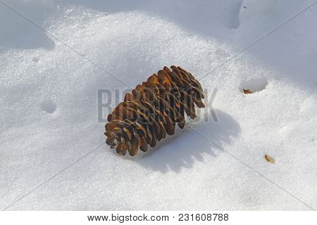 Winter Abstract Background With Pine Cones Close-up