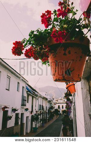Flower. Flower In A Pot On The Street. Estepona, Malaga, Spain.