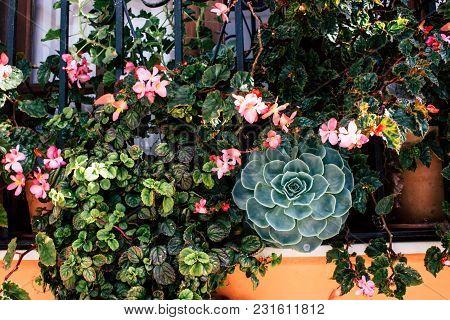 Flowers. Window Decorated With Flowers. Estepona, Malaga, Spain.
