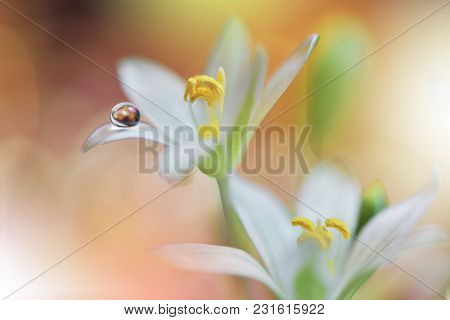 Abstract Macro Photo With Flowers And Water Drops.artistic Background For Desktop. Flowers Made With