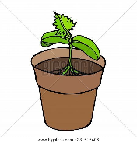 Flower Pot With Soil. Seed, Sprout With Three Leaves And Root. Flowerpot For Sprouting Plant. Seedli