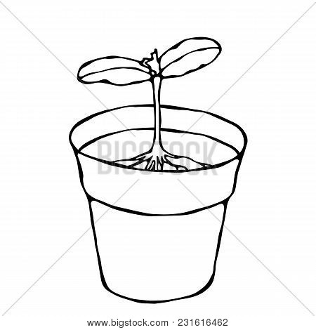 Flower Pot With Soil. Seed, Sprout With Two Leaves And Root. Flowerpot For Sprouting Plant. Seedling