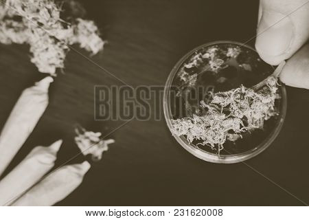 Grinder For Chopping Cannabis And A Flower Of Marijuana On A Black Background Surrounded By Jambs