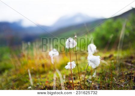 Wild Plants In The Mountains At Sunset. Shallow Depth Of Field.
