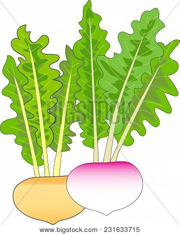 Vegetable And Medicinal Plants Known In The World For A Long Time