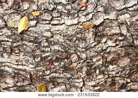 Dark Tree Bark Texture
