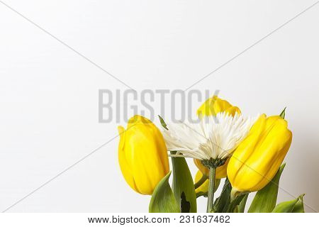 Spring And Summer Flowers On White Background. Background With Yellow Tulips And White Chrysanthemum