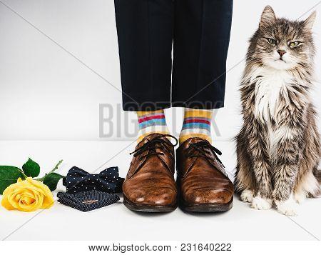 Cute Kitten, Rose And Wedding Rings