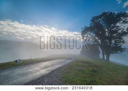 Beautiful Mountain Landscape Of A Foggy Morning With An Old House, Trees And A Stray Dog, Dumesti, S