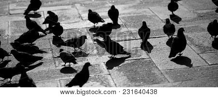 Pigeons In The Square Of Saint Mark In Venice Italy With Black And White Effect