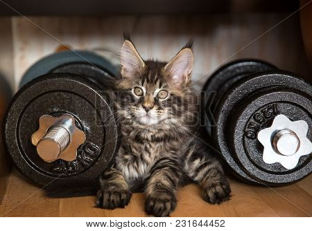 The Cat Lies Next To The Dumbbells