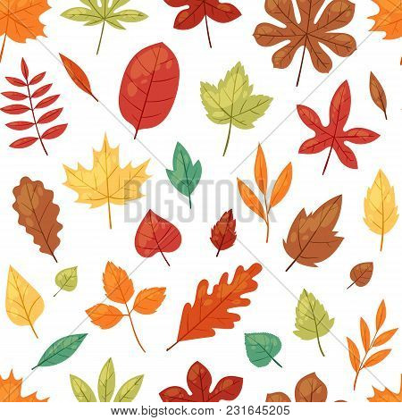 Autumn Leaf Vector Autumnal Leaves Falling From Fallen Trees Leafed Oak And Leafy Maple Or Leafing F