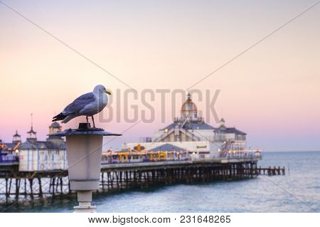 A Seagull Perched On A Lamp Post On Front Of Eastbourne Pier, East Sussex, England, Europe. Focus On