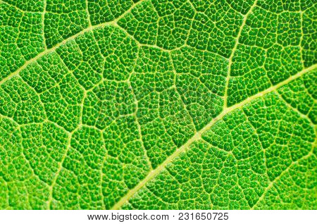 A Green Leaf Texture As A Background