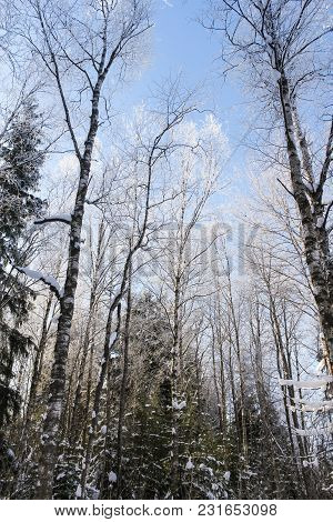 Hoarfrost In The Forest. Winter Nature Under Snow On A Sunny Day.