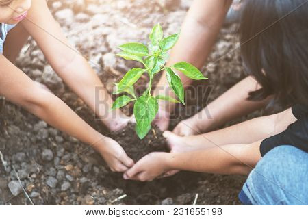 Asian Children Planting Small Tree With Mater On Soil. Concept Green World