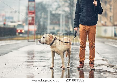 Gloomy Weather In The City. Man With His Dog (labrador Retriever) Walking In Rain On The Street. Pra