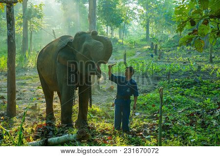 Lampang, Thailand - November 3, 2012: Mahout Training Elephant In Elephant Camp In National Park In