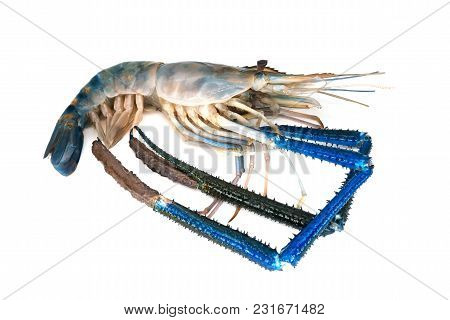 Shrimp Isolated On White, Close Up Of Beautiful Crustacean