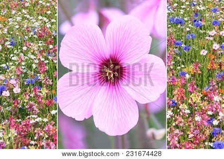 Collage Summer - Single Pink Mallow Blossom And Wonderful Flower Meadow In Various Kinds And Colors