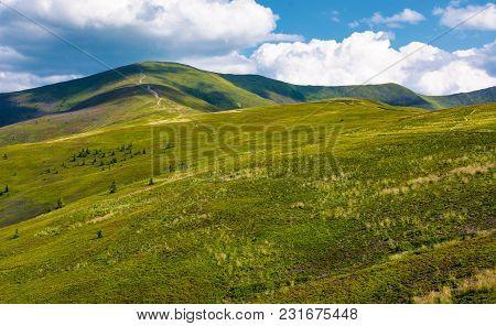 Beautiful Landscape Of Carpathian Mountains. Grassy Hills Of Borzhava Ridge Under The Blue Sky With