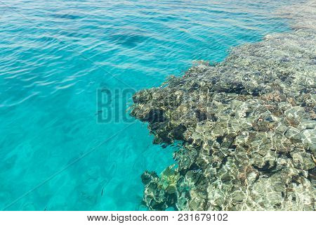 Undrewater Reef On The Red Sea With Corals