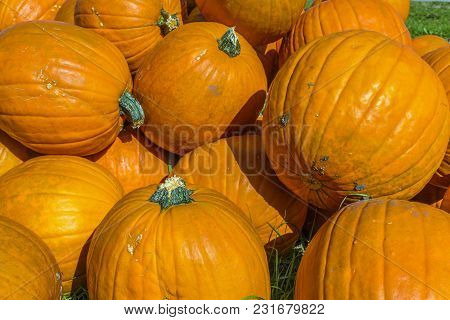 Orange Halloween Pumpkins Exposed For Sale In Germany.