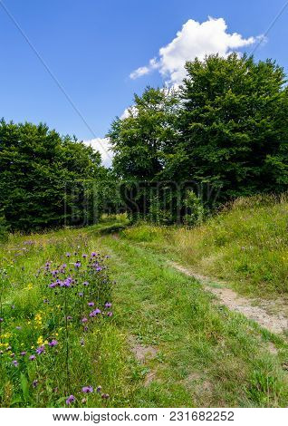 Wide Path Through Meadow In To The Forest. Beautiful Summer Nature Scenery. Blue Sky With Fluffy Clo