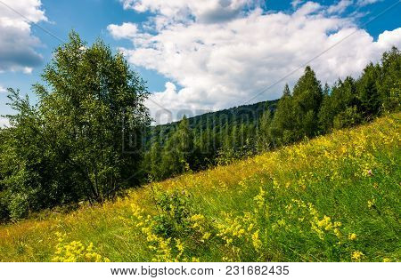 Wild Herbs On A Hillside. Beautiful Nature Scenery In Summer