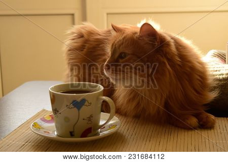 Red Cat Lying On The Table And Sniffing Coffee In A Mug