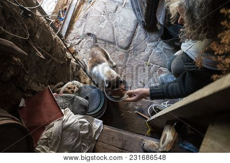 High Angle View Of Old Man With Unkempt Long Gray Hair Feeding Cat By The Door In Old Messy House.