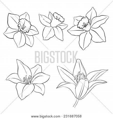 Flowers, Vintage Vector Floral Set Of Isolated Elements In Victorian Style, Imitation Of Engraving,