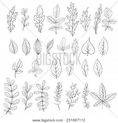 Leaves, Vintage Vector Floral Set Of Isolated Elements In Victorian Style, Imitation Of Engraving, H