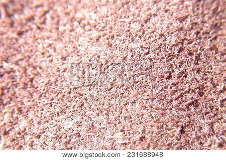 The Texture Of The Carpet In The Sun Close-up Blurred Background