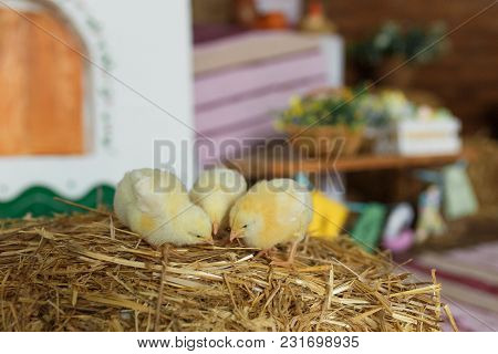 Little Chicks On The Hay In Traditional Ukrainian Interior.