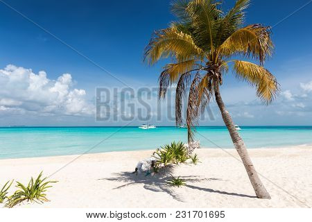 North Beach With A Palm Tree In Isla Mujeres, Yucatan, Mexico
