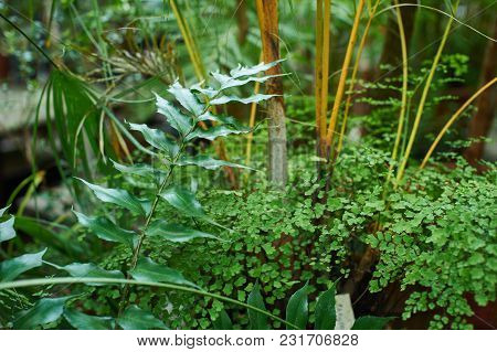 Green Palm Foliage Background, Tropical Jungle Leaves Close Up