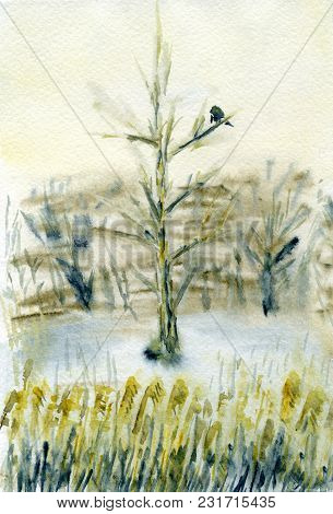 A Bird Sitting On A Tree. Misty Winter Day With Warm Skylight. Reeds Grow In The Foreground. Waterco