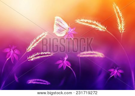 Pink Butterfly Against Of Wild Flowers And Grass In Purple And Yellow Tones. Summer Natural Artistic