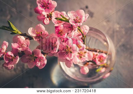 Fresh Pink Cherry Blossom Twigs Bunch In Glass Vase On Gray Background, Retro Toned