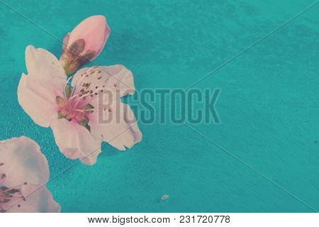 Fresh Pink Cherry Blossom On Blue Wooden Background, Retro Toned