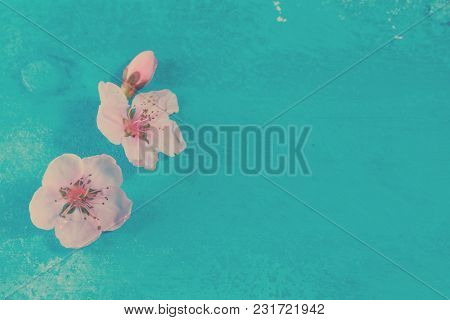 Fresh Pink Cherry Flowers Blossom On Blue Wooden Background, Retro Toned