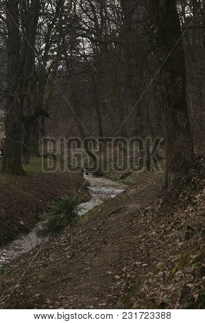 Late Autumn  - A Spring Flowing Through The Forest